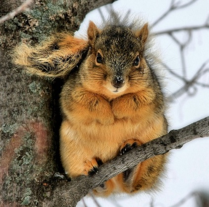 Fat squirrels