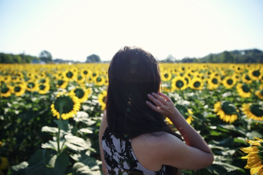 6_sunflower_22