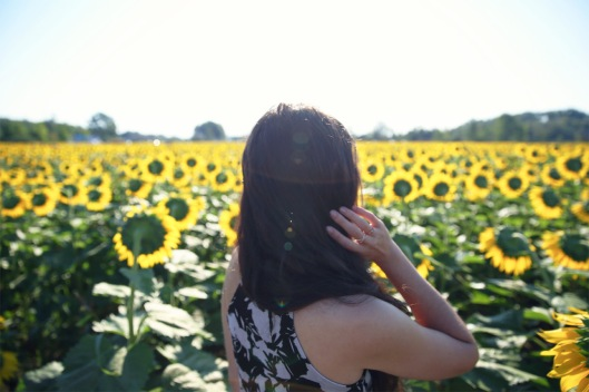 sunflower_shadows